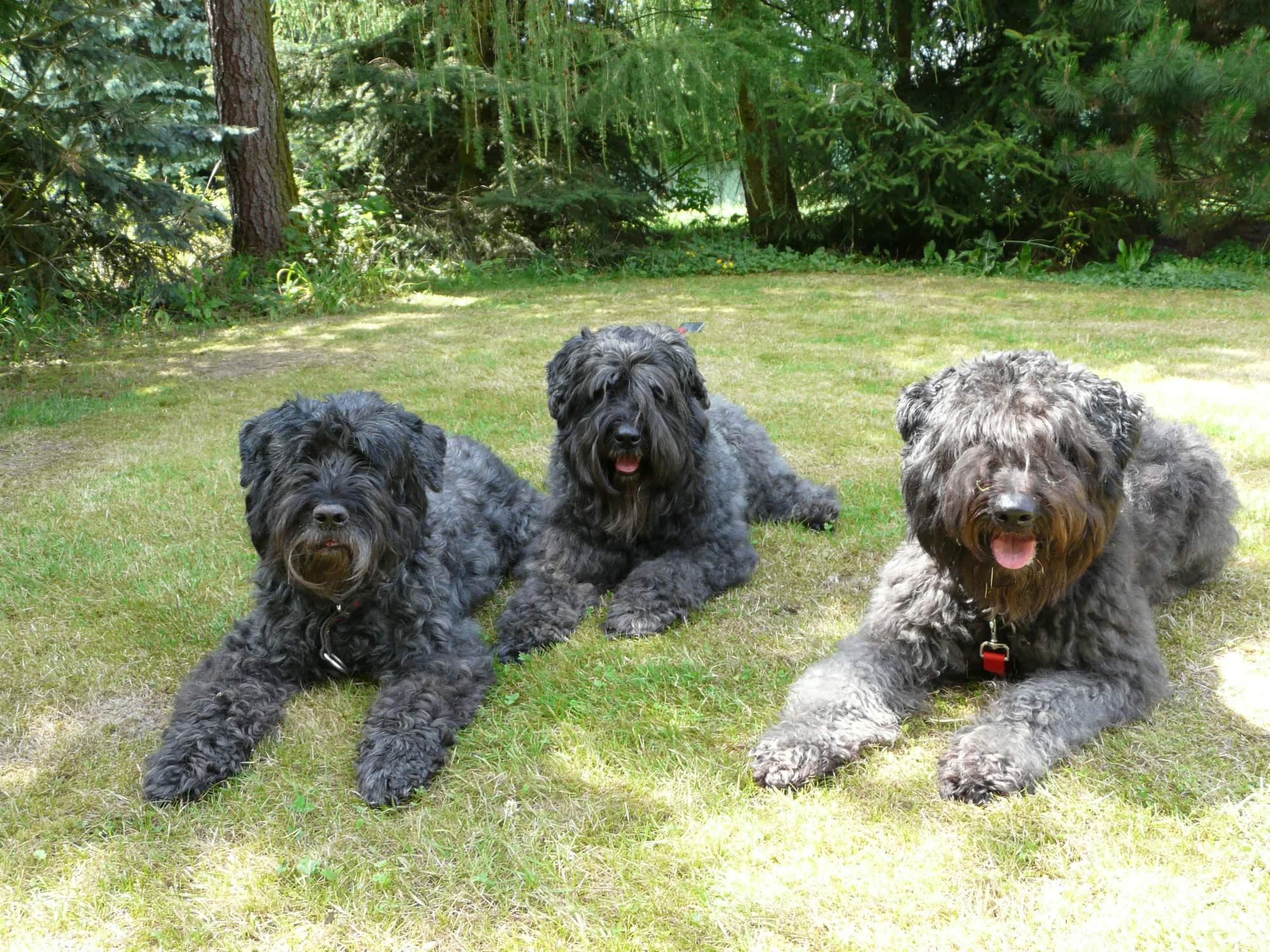 Amanda, Darcy a Ange v létě 2014
